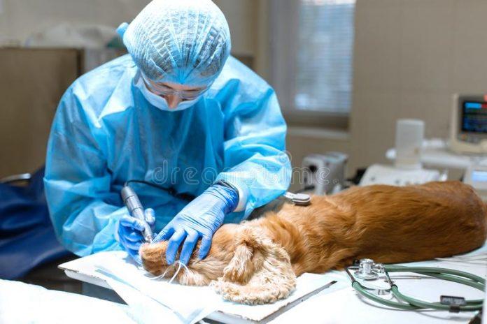veterinary surgeries